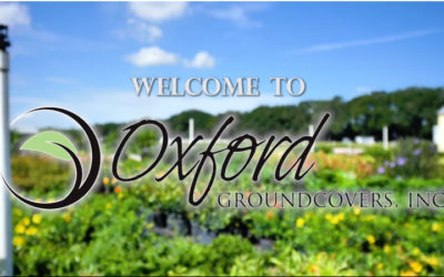 Oxford Groundcovers Promo Video